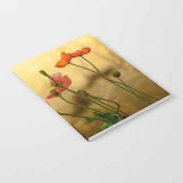 Colorful poppies in evening light Notebook
