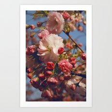 Blossoms in Beijing Art Print