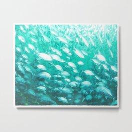 Fish in Turquoise Water Metal Print