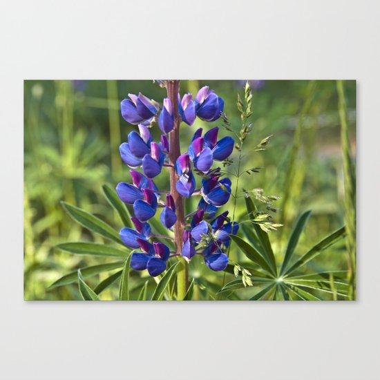 Summer Meadow with Blue Lupine Canvas Print