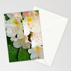 A Beauty All Her Own  Stationery Cards