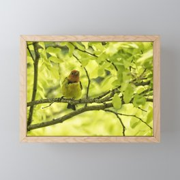 Male Western Tanager, No. 2 Framed Mini Art Print
