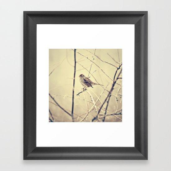 Sweet little bird sitting on a branch Framed Art Print