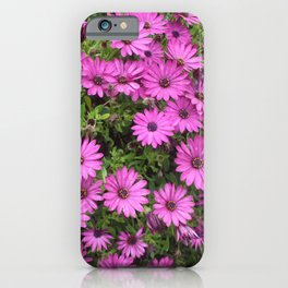 Cheery Purple African Daisies iPhone Case