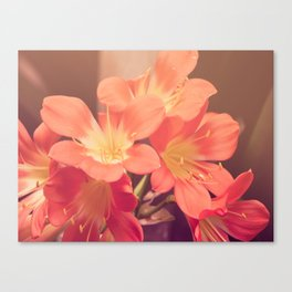 Pastel Pink Flowers Canvas Print