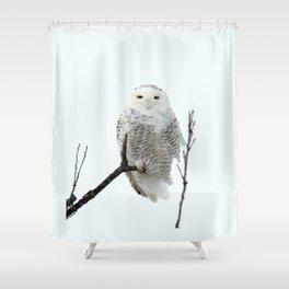 Snowy in the Wind (Snowy Owl) Shower Curtain