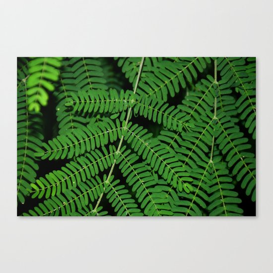 Green Ferns Canvas Print