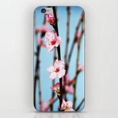 Pretty Pink Peach Petals iPhone & iPod Skin