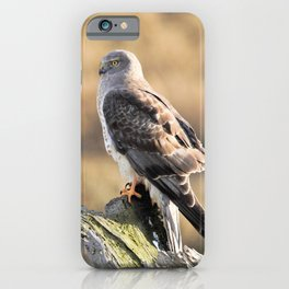 Sunlit Profile of a Northern Harrier Hawk on Driftwood iPhone Case