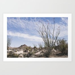 Palm Springs Ocotillo Art Print