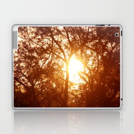 Canopy Sunrise Laptop & iPad Skin