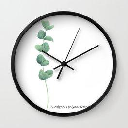 Eucalyptus polyanthemos leaves botanical illustration Wall Clock