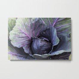 Purple Cabbage Photography Print Metal Print