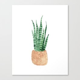 Snake Plant in a clay planter Canvas Print