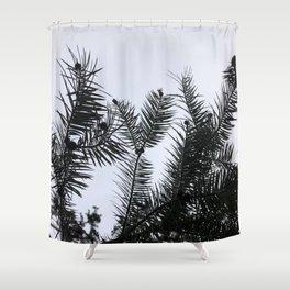 Silver Fir Abies Alba Abstract Shower Curtain