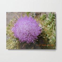 road trip, plant, nature, purple, plant top, pokey, sticker plant Metal Print