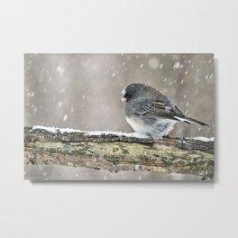 Once Upon a Snow Bird: Junco Metal Print