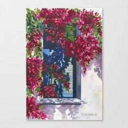Shutters & Bougainvillea Canvas Print