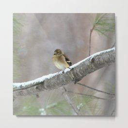 A Cold Winter Day (American Goldfinch) Metal Print
