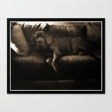 My dog - a Mastino Napoletano  Canvas Print