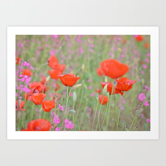 Poppies and Campions Art Print