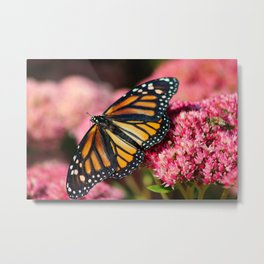 Monarch Butterfly & Bee Metal Print