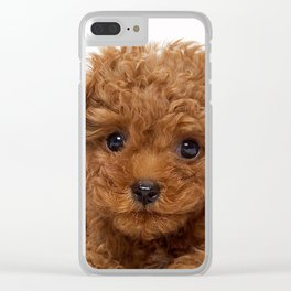 Little Brown Toy Poodle Clear iPhone Case