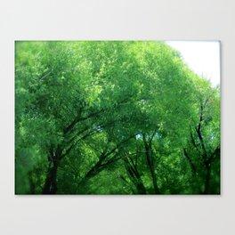Tree Dance Turns to Rain Dance  Canvas Print