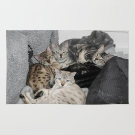 Bengal Cat Kitty Pile  Rug