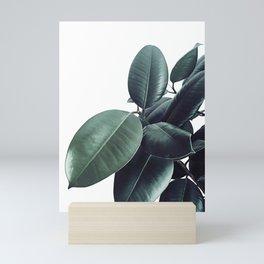 Ficus Elastica #13 #decor #art #society6 Mini Art Print