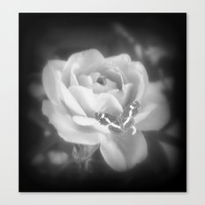 Butterfly Rose. Canvas Print