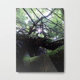 Woodland Light Metal Print