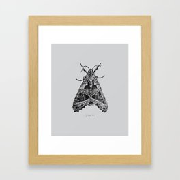 Cabbage Moth [Mamestra brassicae] Framed Art Print