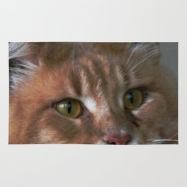 Orange cat with yellow eyes Rug