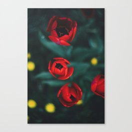 Red roses yellow Canvas Print