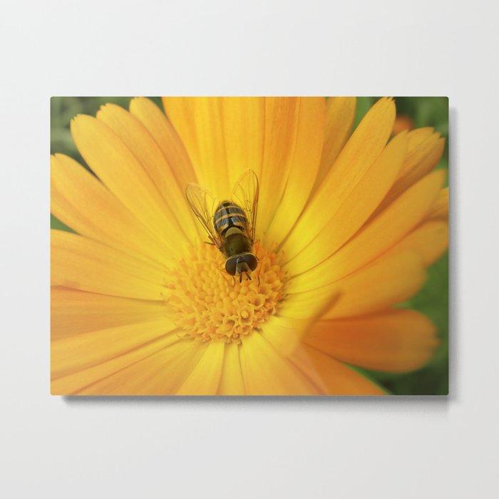 flower fly macro II Metal Print