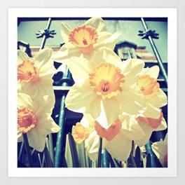 Alexander's Daffodils Art Print
