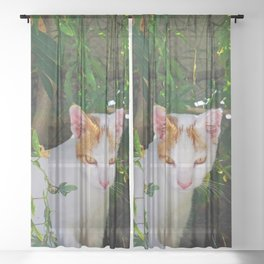 Yellow eyed cat Sheer Curtain