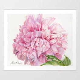 Pink Peony Floral Watercolor Detailed Botanical Garden Flower Realism Art Print