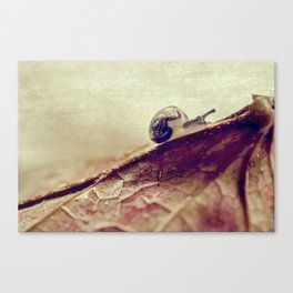 little snail Canvas Print