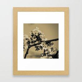 Bloom #2 Framed Art Print