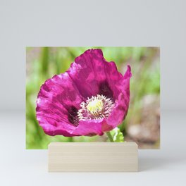 Purple Poppy by Reay of Light Photography Mini Art Print