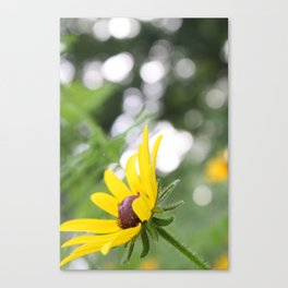 Sunflower & Bokeh Canvas Print