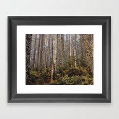 Sunlight in the forest Framed Art Print