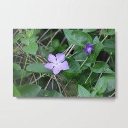 Blue petals on green Metal Print