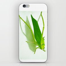 Kadydid iPhone & iPod Skin