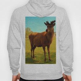 Young Deer (Cervidae) Hoody