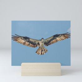 Osprey in Montana Mini Art Print