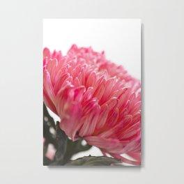 Chrysanthemum Flower II Metal Print