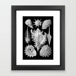 Black and White Beach Shells Framed Art Print